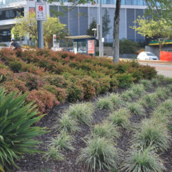 Balwyn North commercial garden maintenance