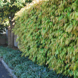 Balwyn North commercial gardener