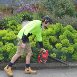 Balwyn North garden maintenance