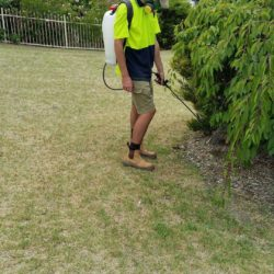Balwyn North weed spraying service