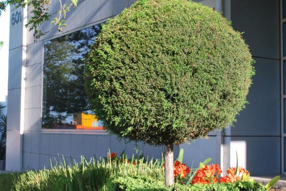 Balwyn gardening services