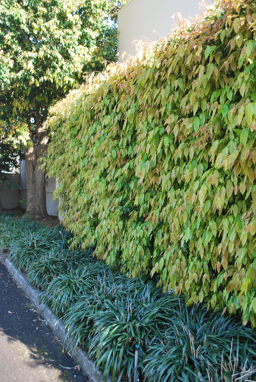 Residential garden maintenance in templestowe greenbelt for Garden maintenance