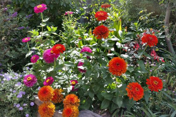 Gardening Templestowe