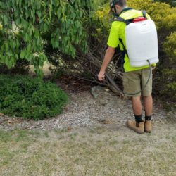 Weed spraying Balwyn North