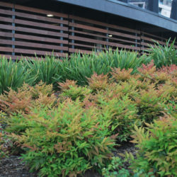 commercial garden bed maintenance Balwyn North