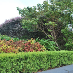 commercial gardens maintenance Balwyn North